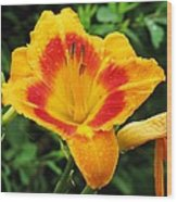 Flower Garden 05 Wood Print