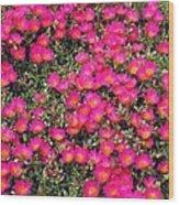 Flower Garden 39 Wood Print