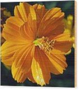 Flower Garden 43 Wood Print