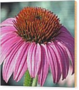 Flower Garden 50 Wood Print