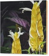 Flower Garden 51 Wood Print