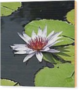 Flower Garden 60 Wood Print