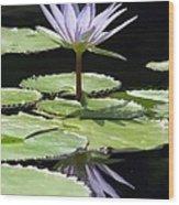 Flower Garden 62 Wood Print