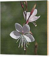 Flower-gaura-white  Wood Print