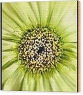 Flower Green Wood Print
