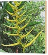 flower Helicnia Wood Print
