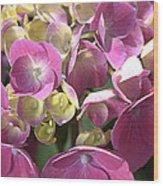 Flower-hydrangea Pink Wood Print