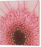 Flower - I Love Pink Wood Print