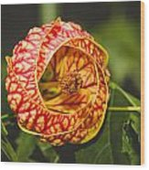 Flower In Red And Yellow  Wood Print