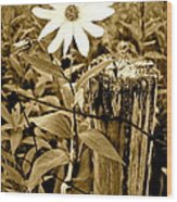 Flower In Sepia Wood Print