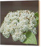 Flower In The Spotlight Wood Print