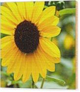 Flower In The Sun Wood Print