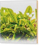 Flower In Tree Wood Print by Lisa Cortez