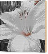 Flower Isolate Wood Print