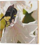 Flower King Wood Print