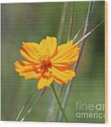 Flower Lit By The Sun's Rays Wood Print