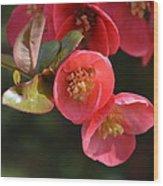 Flower Love Wood Print by Sheldon Blackwell