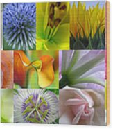 Flower Macro Photography Wood Print by Juergen Roth