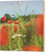 Flower Meadow In Summer With Red Poppy Wood Print
