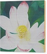 Flower Nectar Wood Print