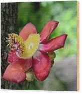 Flower Of Cannonball Tree Singapore Wood Print