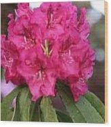 Flower Of Capilano Wood Print