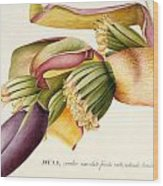 Flower Of The Banana Tree  Wood Print