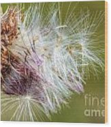 Flower Of The Canada Thistle Wood Print