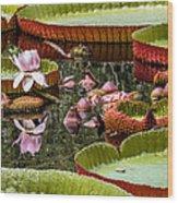 Flower Of Victoria Cruziana Wood Print