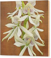 Flower - Orchid - A Gift For You  Wood Print