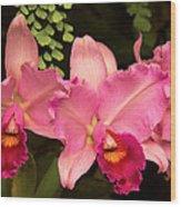 Flower - Orchid -  Cattleya - Magenta Splendor Wood Print