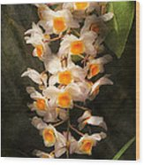 Flower - Orchid - Dendrobium Orchid Wood Print