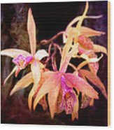 Flower - Orchid - Laelia - Midnight Passion Wood Print by Mike Savad