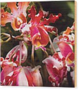 Flower - Orchid - Oncidium Orchid - Eye Candy Wood Print