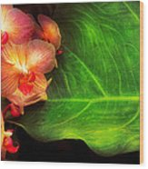 Flower - Orchid - Phalaenopsis Orchids At Rest Wood Print