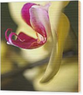 Flower-orchid-yellow Wood Print
