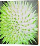 Flower Power 1361 Wood Print