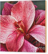Flower Power In Pink By Diana Sainz Wood Print