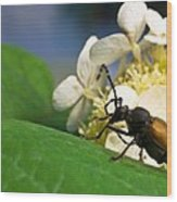 Flower Rise Over Beetle Wood Print