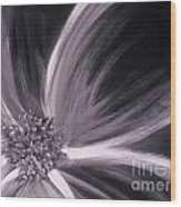 Flower Romance II Wood Print by LCS Art