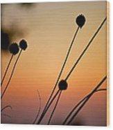 Flower Silhouettes I Wood Print