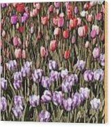 Flower Splash Vi Wood Print