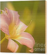 Flower Wood Print by Sylvia  Niklasson