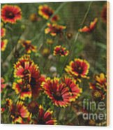 Texas Indian Blanket -  Luther Fine Art Wood Print