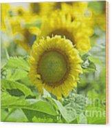 Flower - Texas Sunflower Field 1 - Luther Fine Art Wood Print