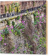 Flower Wall Along The Arno River- Florence Italy Wood Print