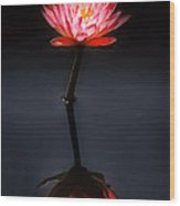 Flower - Water Lily - Nymphaea Jack Wood - Reflection Wood Print