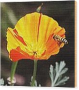 Flower With Honey Bee Wood Print