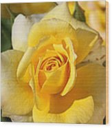 Flower-yellow Rose-delight Wood Print