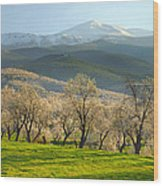 Flowering Almond At The Mountains Wood Print